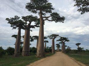allée des baobabs jour
